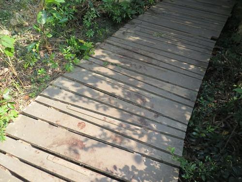 木棧道山羌血跡斑斑。攝影:壽山籌備處
