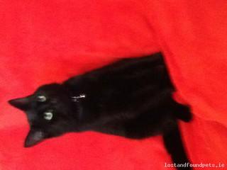 Sun, Apr 26th, 2015 Lost Male Cat - Carrigallen, Leitrim