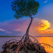 Mangrove Tree Under Crescent Moon at Lagoon by Captain Kimo