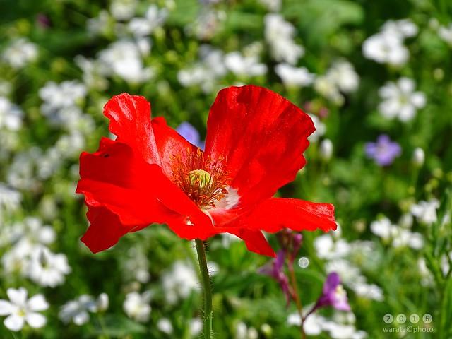 Blumenwiese  am  Oberrieder Weiher  in Bayerisch Schwaben