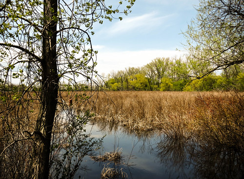 trees nature water minnesota landscape spring midwest wetlands grasses marsh winona marshland