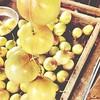 Buah #Markisa Masak Ranum | Cameron Apple | #Morib | Selangor Darul Ehsan | Malaysia