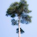 Small photo of High tree