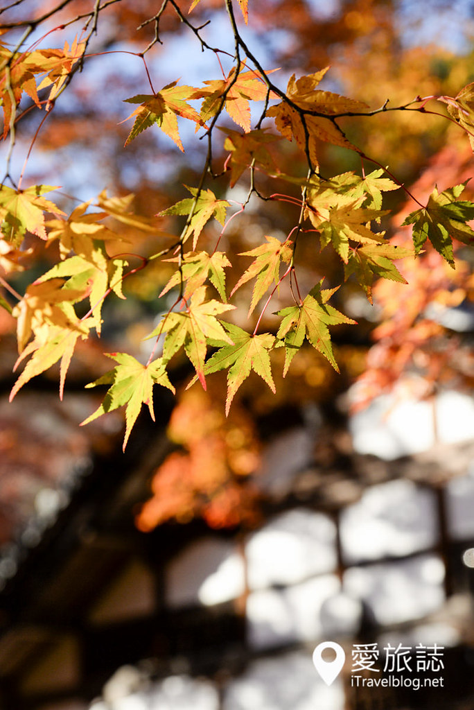 京都赏枫景点 高雄西明寺 18