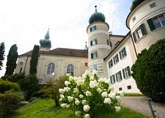 fiori e castelli