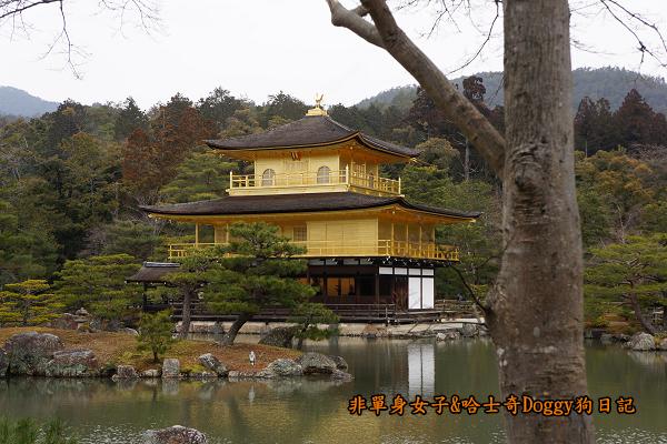 日本京都金閣寺13