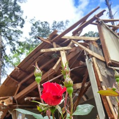 Longview residents continue to clean up after last week's tornado.