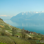 Vineyards and Snow-Capped Mountains - Near Lausanne, Switzerland