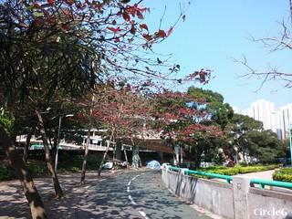 CIRCLEG 等埋我先玩喎 回歸原點 繪圖 新都城 MCP 小熊 東港城 海洋公園 樹熊 袋鼠 貓CAFE 南灣 玩在棋中 BOARDGAME 香香雞 (10)