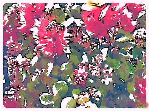 Bottle Brush Plant Edited in Waterlogue Photo App Using the 'Blotted' Style