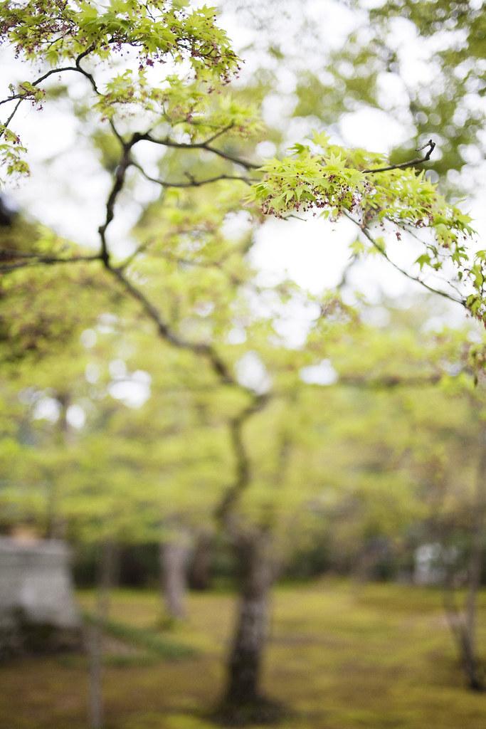 Kinkaku-ji, Kyoto, Japan_IMG_5081