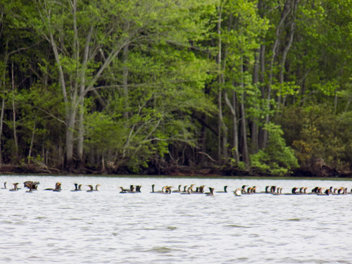 Lake Marion Plantation Islands-26