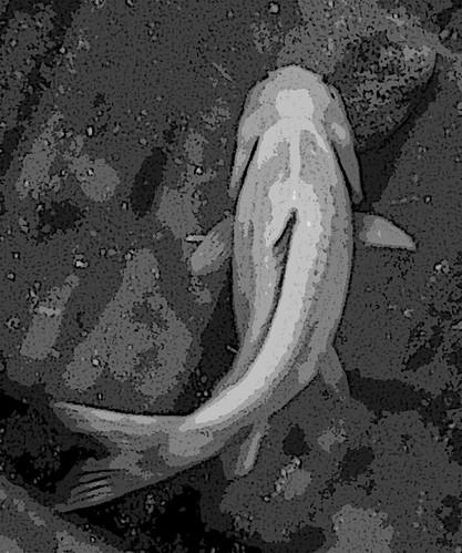 Fish Light Stencil