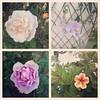 the garden is flowering