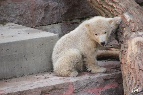 Zoo Rostock 11.04.201523