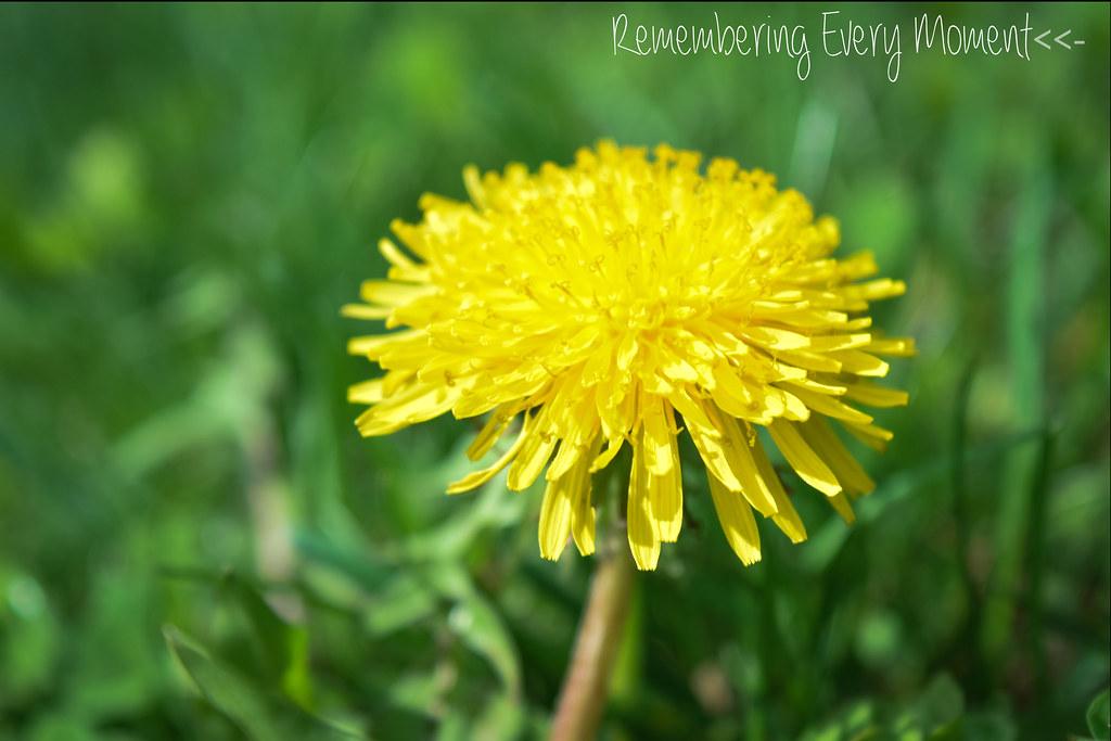 sitepicflowersanddandelions