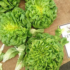 Irresistibly adorable heads of lettuce by Suzy's Farms #vegan #vegansd #vegansofig #vegansandiego #sandiego #hillcrestfarmersmarket #farmersmarket #p2tv #whatveganseat #suzysfarms