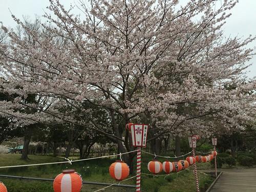 20_袖ヶ浦公園の桜_1