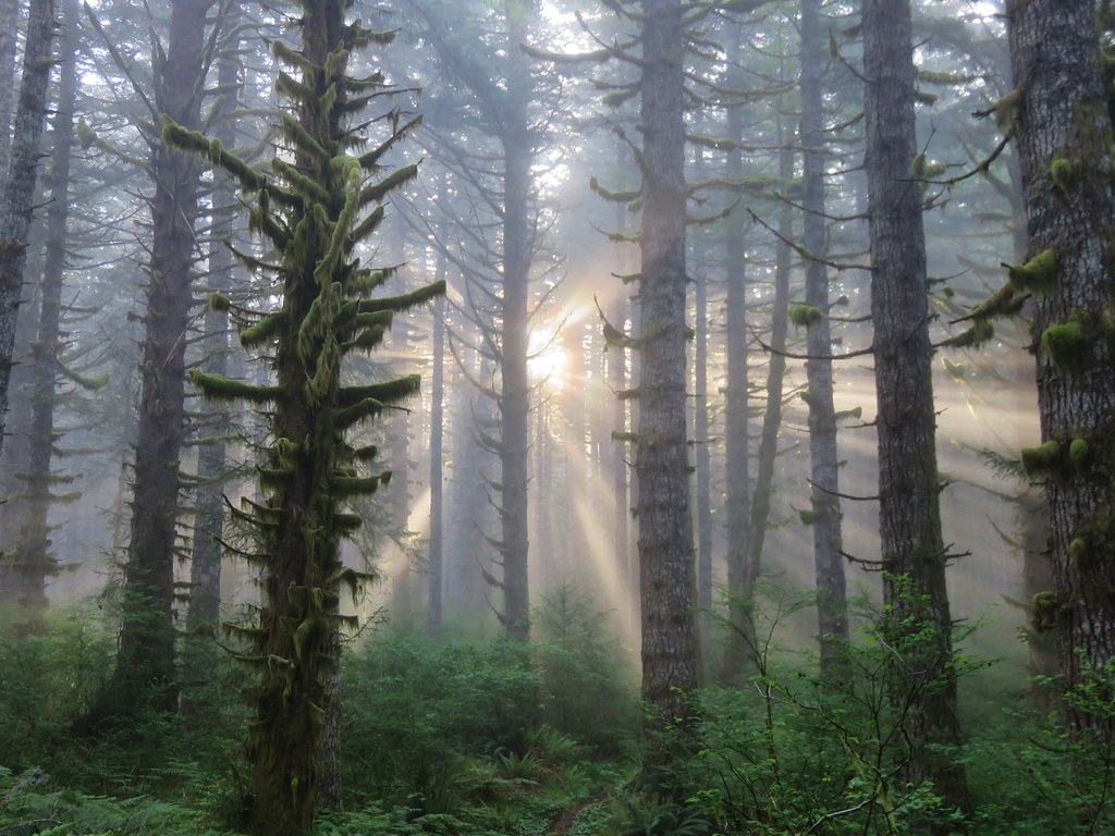 Sunlight penetrating the clouds in the Siuslaw National Forest