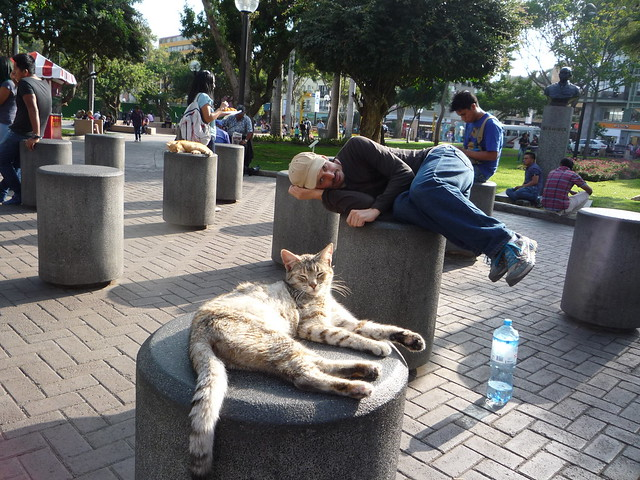 Kurt was tired too in Kennedy Park in Miraflores