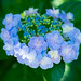 はなかんむり Flower crown by qrsk