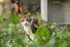 Village Cats :: Cha Kwo Ling (茶果嶺), Hong Kong