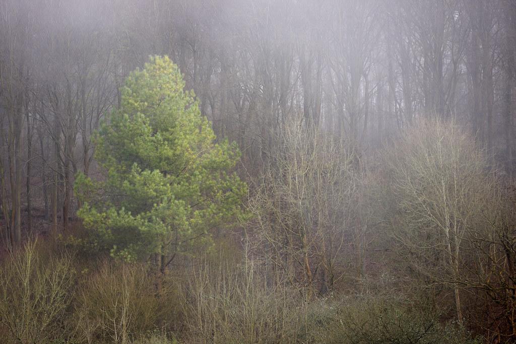 Fog Bank, Friston Forest