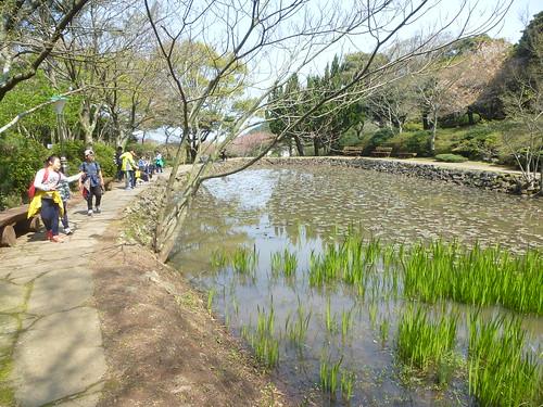 Co-Jejudo-Jeju 2-Halla Arboretum (8)