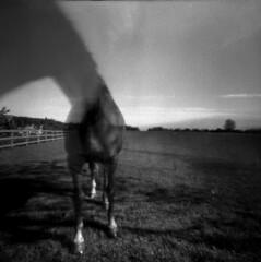 Horse #2 - 2015