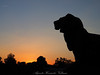 The lion silhouette.