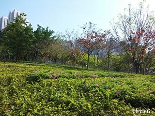 CIRCLEG 等埋我先玩喎 回歸原點 繪圖 新都城 MCP 小熊 東港城 海洋公園 樹熊 袋鼠 貓CAFE 南灣 玩在棋中 BOARDGAME 香香雞 (9)