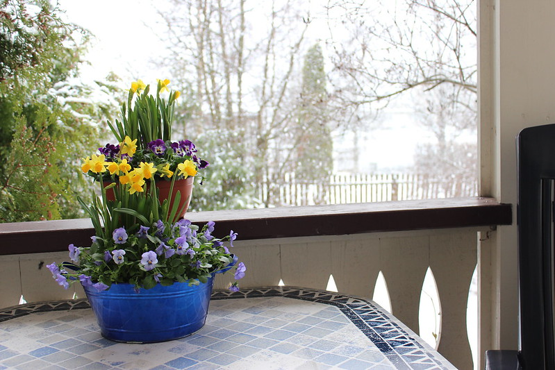 Easter, Et dryss kanel
