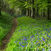 #IntoTheWild Path in the spring woods [EXPLORED 27 MAY 2015] by peterchapman176_Check TheNewPeterChapman