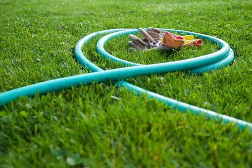 yard, garden, plants DSCF8574