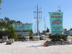 Turtle Hospital / Sea Turtle Center