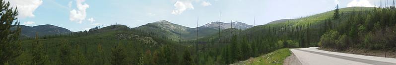 Forest Below Sherman Pass