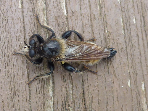 Welche Biene ist das? , NGIDn564892820