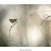 L'hespérie by bertholino fabrice