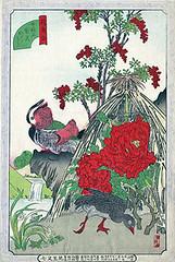 Tree peony, heavenly bamboo, bunchflower daffodil and mandarin duck