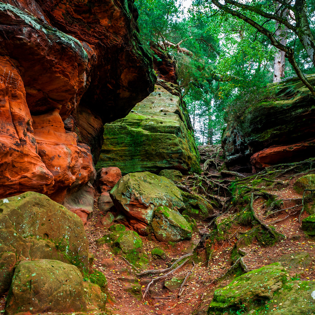 stones, roots and green