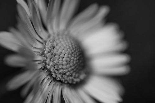 Daisy // 05 05 15