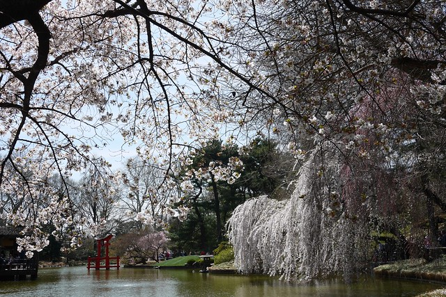 日, 2015-04-19 13:24 - Brooklyn Botanic Garden