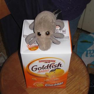 Economy sized goldfish, economy sized dust mite