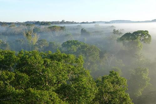 「搶救地球」劇照-地球之肺亞馬遜雨林;圖片來源:公視