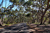 Sugar Gum Native Forest Corridor near Kelly Hill Caves, Kangaroo Island, South Australia