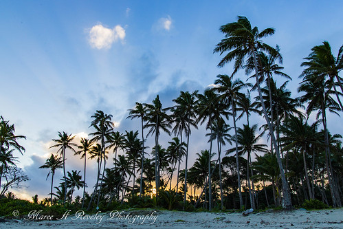 2016 canonef24105mmf3556isstm canoneos6d fiji july landscape mareeareveleyphotography pacificharbour winter centraldivision fj palmtree palms sunset dusk rays beach mareeareveley