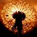 Sun-flower / Sonnen-Blume by Caledoniafan