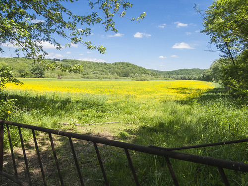 ohio field bikepath bicycle yellow rural gold nikon raw farm country meadow coolpix nrw biketrail cs6 p330 holmescountyohio