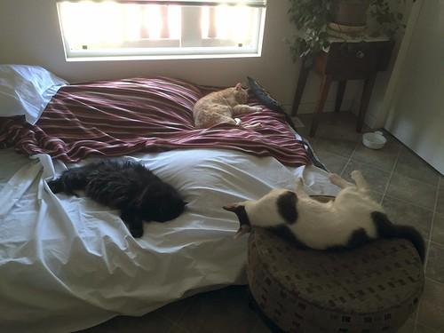 3 cats 3