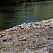 Riverbend Ponds_MIN 325_20